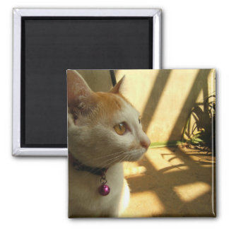 A Cat's Indulgence 2 Inch Square Magnet