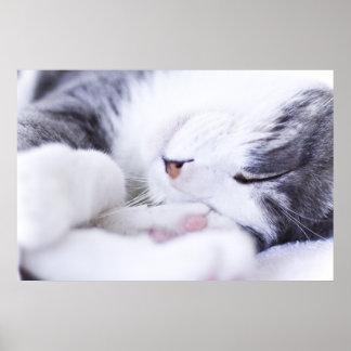 A cat's Life Poster