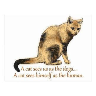 A Cat's Perceptions Postcard