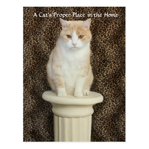A Cat's Proper Place in the Home Postcard