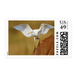 A Cattle Egret (Bubulcus Ibis) Descends Stamp