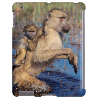 A Chacma Baboon carrying young through a river
