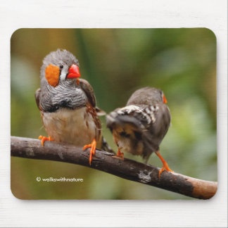 A Cheeky Pair of Zebra Finches Mouse Pad