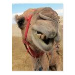 A Cheerful Camel Postcard