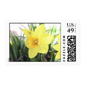 A Cheerful Yellow Daffodil Postage Stamp