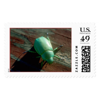 A Chihuahuan Scarab Postage Stamps