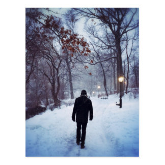 A Chilly Path In Central Park Postcard