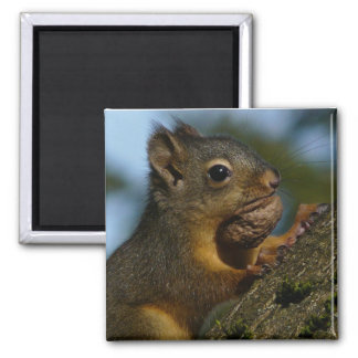 A Chipmunk's Treasures Magnets