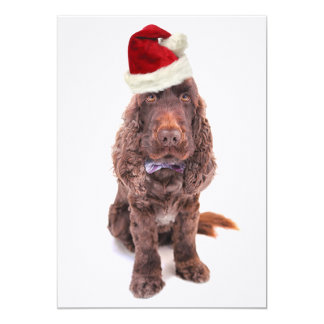 A chocolate English cocker spaniel Card