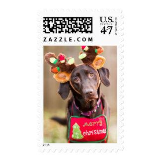 A Chocolate Labrador Retriever dog Postage