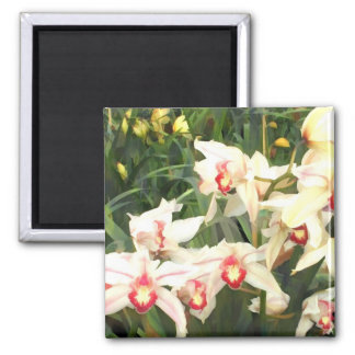 A Chorus Line of Cymbidiums 2 Inch Square Magnet