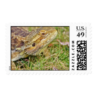 A close up of a head of a bearded dragon sitting o stamp