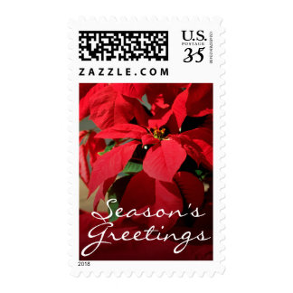 A close-up of a poinsettia postage