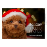 A close up, of a red toy poodle card