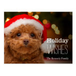 A close up, of a red toy poodle postcard
