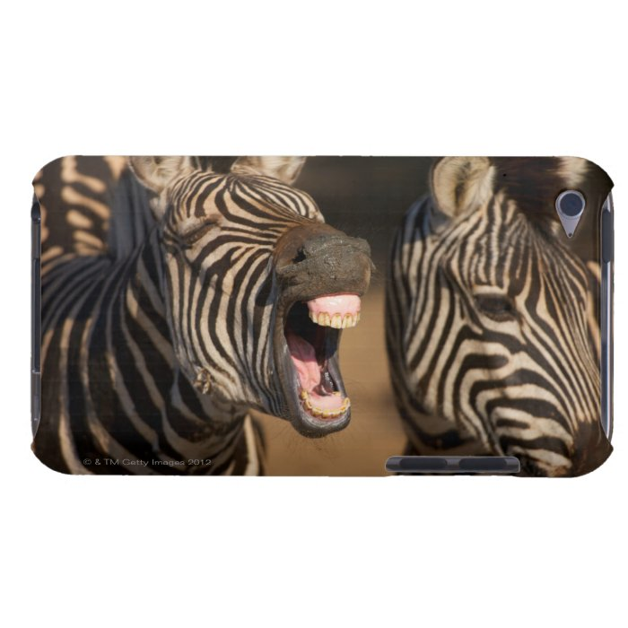 A close-up of a Zebra showing its teeth, Barely There iPod Cover