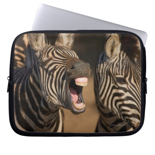 A close-up of a Zebra showing its teeth, Computer Sleeve