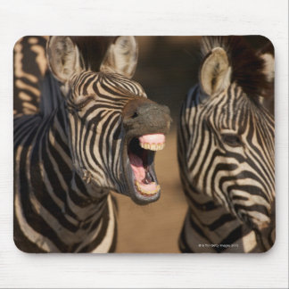 A close-up of a Zebra showing its teeth, Mouse Pad