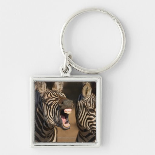 A close-up of a Zebra showing its teeth, Silver-Colored Square Keychain