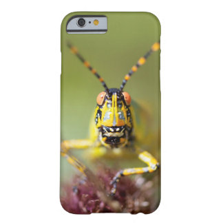 A close-up of an Elegant Grasshopper Barely There iPhone 6 Case