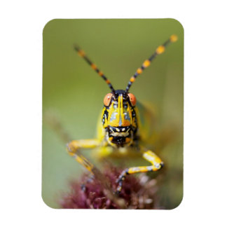 A close-up of an Elegant Grasshopper Magnet