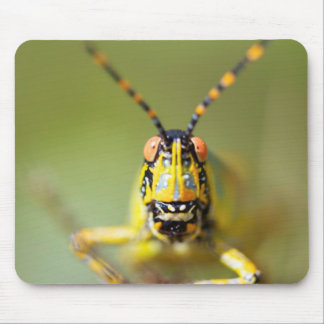 A close-up of an Elegant Grasshopper Mouse Pad