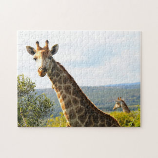 A close up photo of a male Giraffe on Safari Jigsaw Puzzles