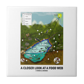 A Closer Look At A Food Web (Biology / Ecology) Small Square Tile