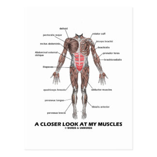 A Closer Look At My Muscles (Anatomy / Anatomical) Postcard