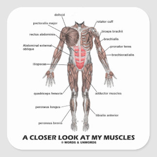 A Closer Look At My Muscles (Anatomy / Anatomical) Stickers
