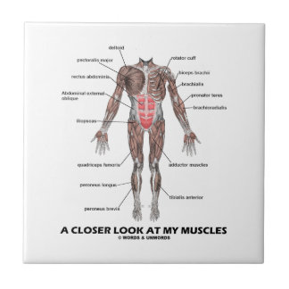 A Closer Look At My Muscles (Anatomy / Anatomical) Small Square Tile