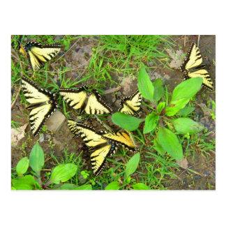 A Cluster of Butterflies Postcard