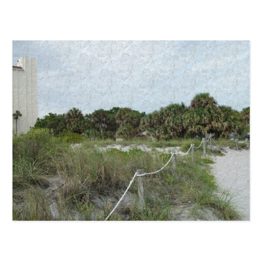 A Coastal Trail in Blue Spruce Texture Postcard