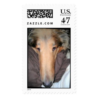 A Collie NOSE Love postage