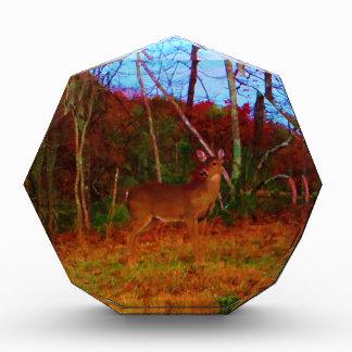 A Colorful Deer at Sunset Award