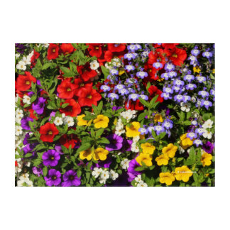 A Colorful Pastiche of Summer Annual Flowers Acrylic Print
