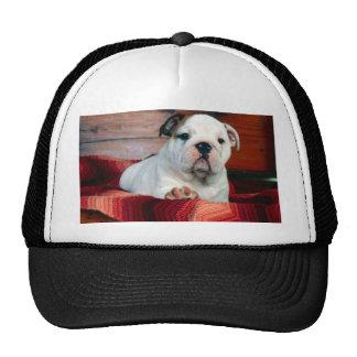 A Comfy Drawer, Bulldog Puppy Trucker Hat