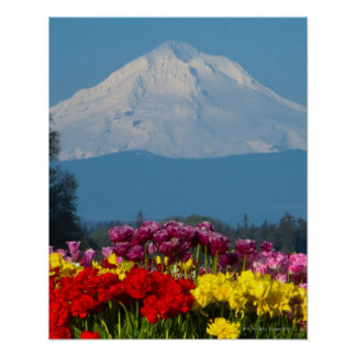 a compressed view of Mt Hood, Oregon and tulip Print