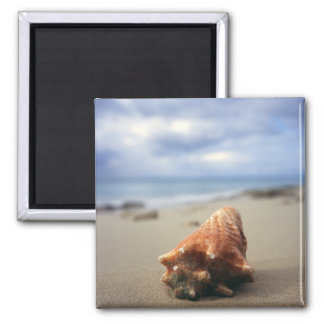 A Conch Shell On The Beach | St. Croix, Usvi 2 Inch Square Magnet