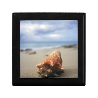 A Conch Shell On The Beach | St. Croix, Usvi Gift Box