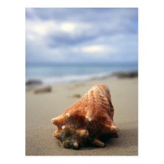 A Conch Shell On The Beach | St. Croix, Usvi Postcard