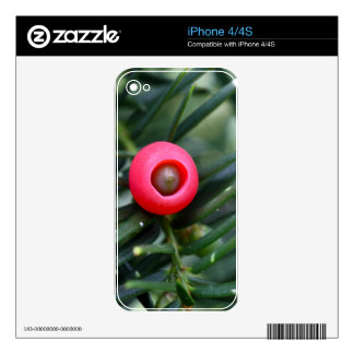 A cone of a yew (Taxus baccata) Skins For The iPhone 4