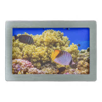A Coral Reef in the Red Sea near Egypt Belt Buckle