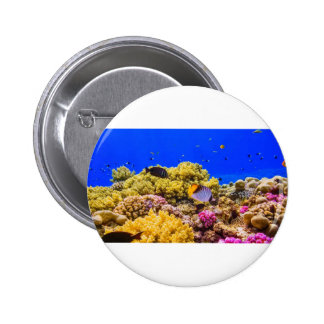 A Coral Reef in the Red Sea near Egypt Button