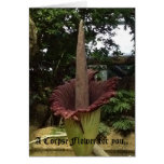 A Corpse Flower for you.. Greeting Card