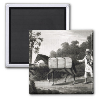 A Cotton Carrier, from 'Travels in Brazil' Magnet