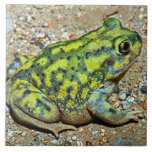 A Couch's Spadefoot toad Ceramic Tiles