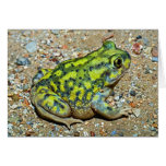 A Couch's Spadefoot toad Greeting Card