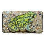 A Couch's Spadefoot toad iPod Touch Case-Mate Case