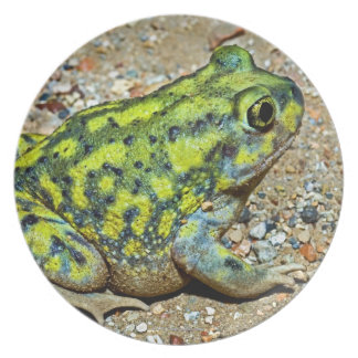 A Couch's Spadefoot toad Melamine Plate